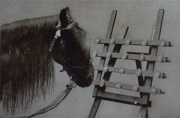 Как сложилась судьба самого умного коня на планете