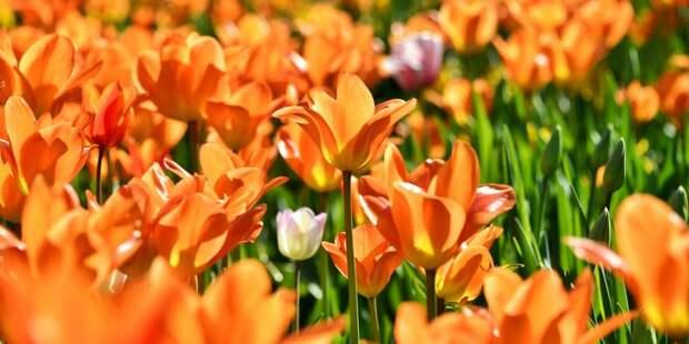 В вашем дворе уже высадили цветы? – новый опрос жителей Бабушкинского