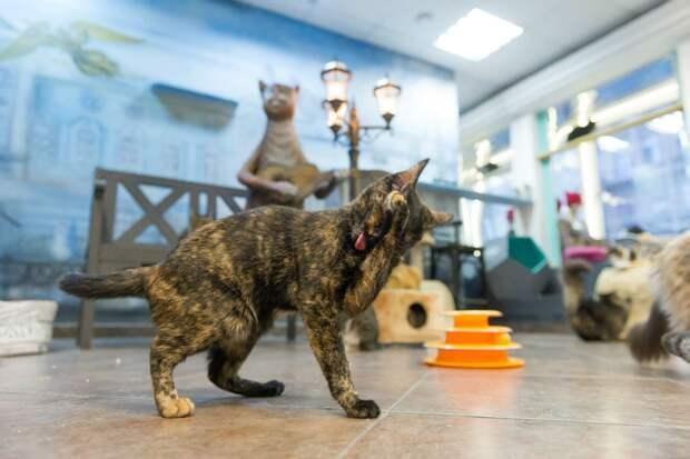 Необычный окрас делает кошку похожей на уголек Фото: Олег ЗОЛОТО