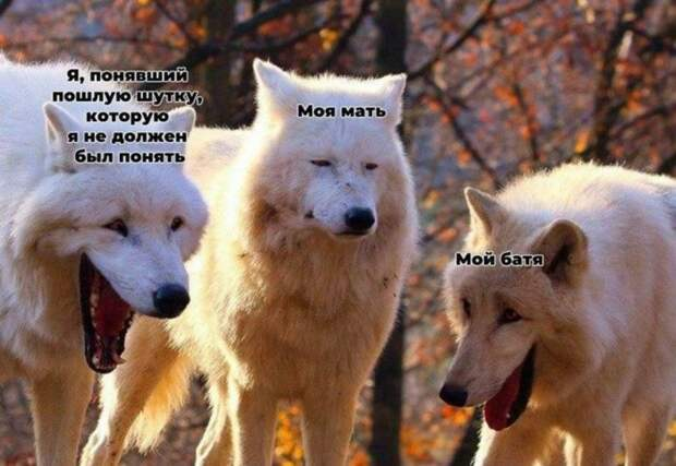 10 мемов про двух волков, которые смеются над третьим