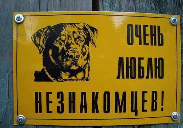 Самый общительный пес животные, прикол