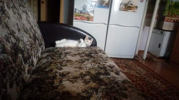 """""""В дверь постучали… Пришла соседка, принесла за шкирку заморыша!"""" Оказалось – домашний Тигр)"""