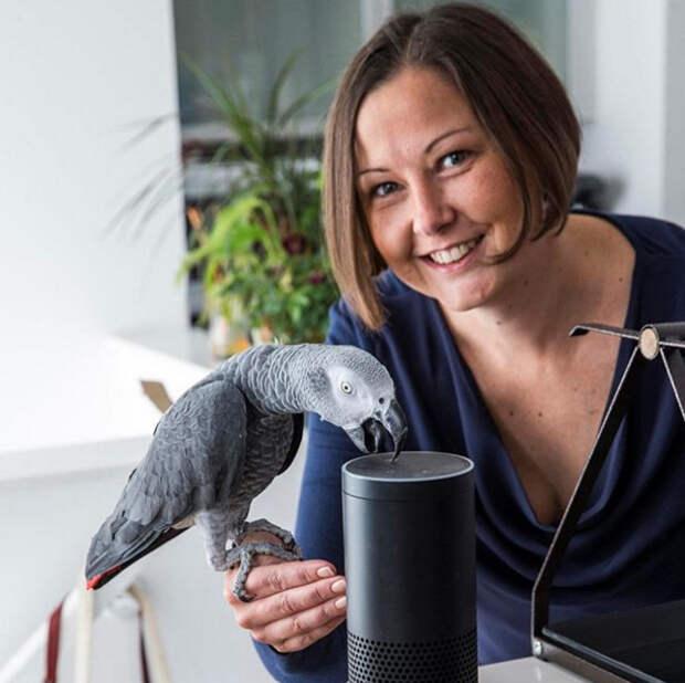 Попугай потратил $14 на Amazon, пока его хозяйка была на работе