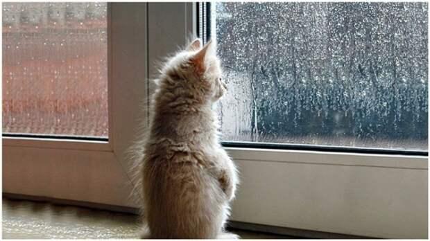 Любопытные Варвары! Животные, которые просто обожают заглядывать в окна))