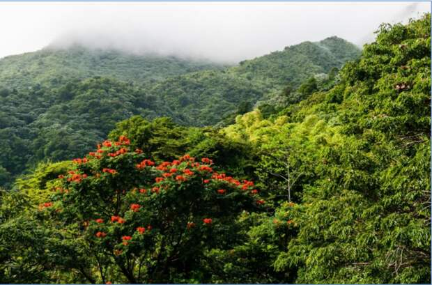 Дождевой лес хребта Лукильо (Luquillo Mountain Range) в Пуэрто-Рико. Фото с www.tripadvisor.ru
