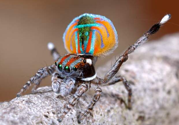 паук.jpg