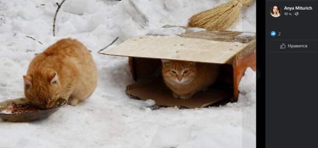 Фото дня: бездомные коты-братья из Аэропорта