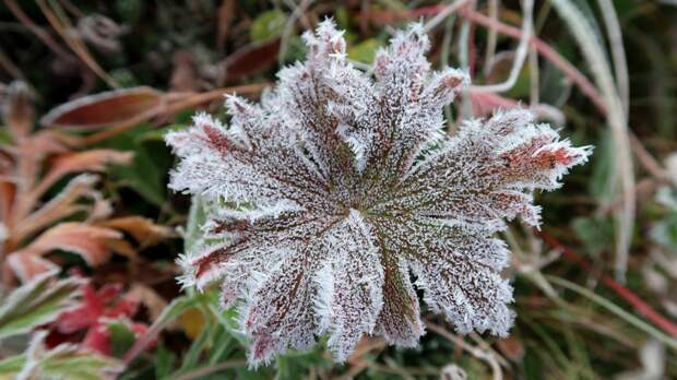 Резкое похолодание настигнет Западную Сибирь с 19 мая