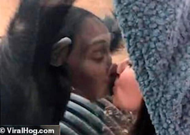 Шимпанзе поцеловал американку на глазах у ее мужа