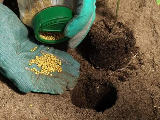 Какие удобрения вносить в лунку при посадке рассады