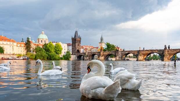 Чехия планирует сократить количество российских дипломатов в республике