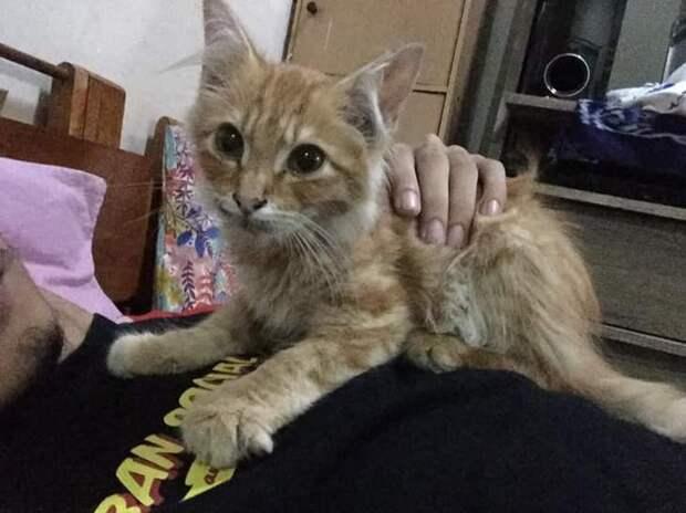 После смерти хозяина котенок впал в депрессию, отказался есть и поправился лишь когда его принесли к могиле хозяина