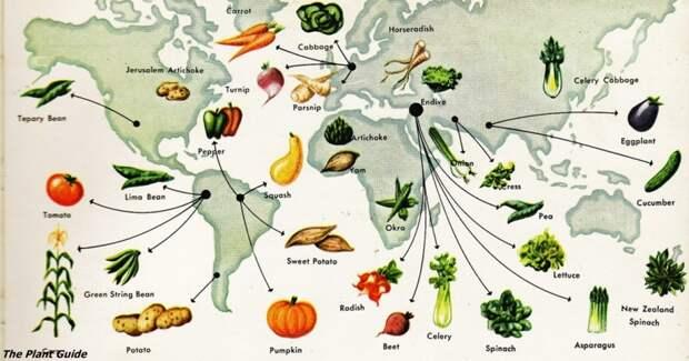 История каждого овоща. Про огурцы — очень познавательно!
