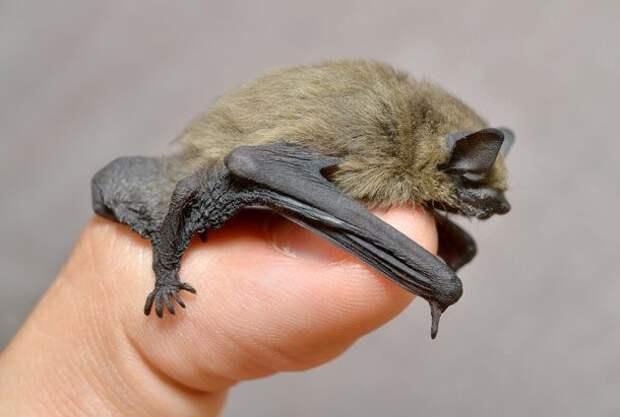 ТОП-25: Удивительные факты о животных, которые вы можете не знать