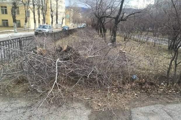 Активистка Савватеева заявила, что под срубленными деревьями на Горького нет теплотрассы