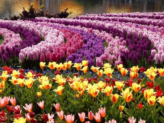 Подборка занимательных фактов о цветах