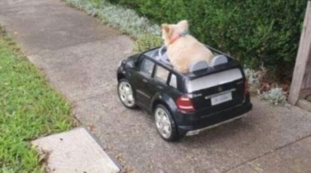 Когда старенький пёс ослеп и оглох, ему стало тяжело гулять на улице. Поступок его хозяина растрогал даже полицейских