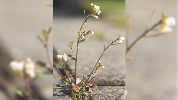 Американские ученые обнаружили у растений новый орган