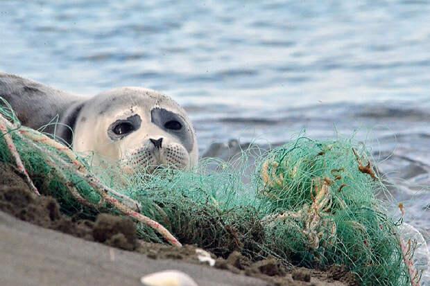 Минприроды назвало причину массовой гибели тюленей на Каспии