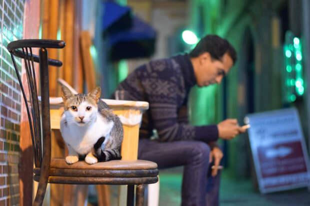 Чего смотришь? Эс-Сувейра, город, животные, кот, марокко, проект, фотограф