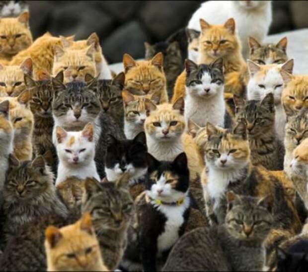 Откуда взялись кошки