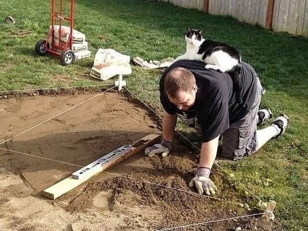 Как хорошо, когда есть помощник!