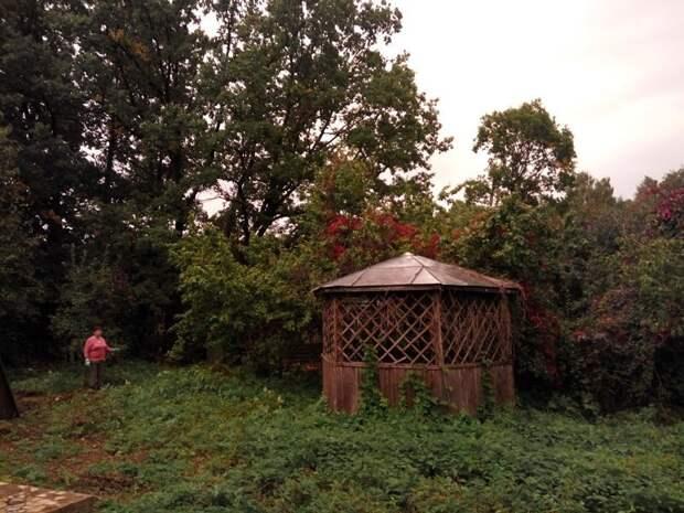 Зелёный ад дача, земля, отдых, пикник, труд, участок