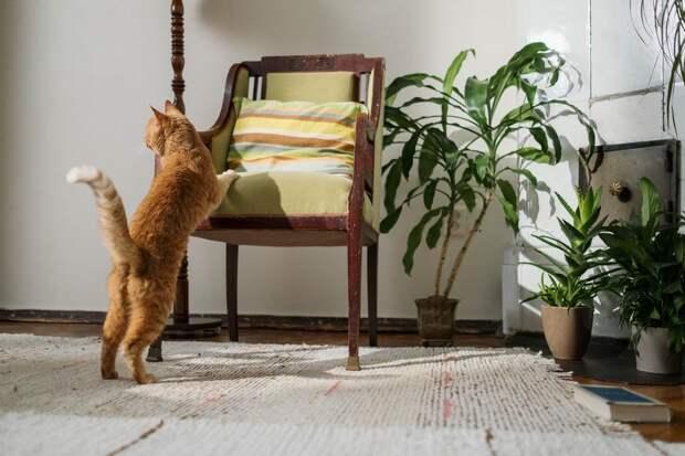 Как отучить взрослую кошку царапать мебель