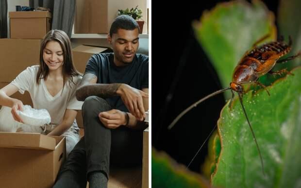 Муж и жена за три года переехали 18 раз. Всему виной боязнь насекомых