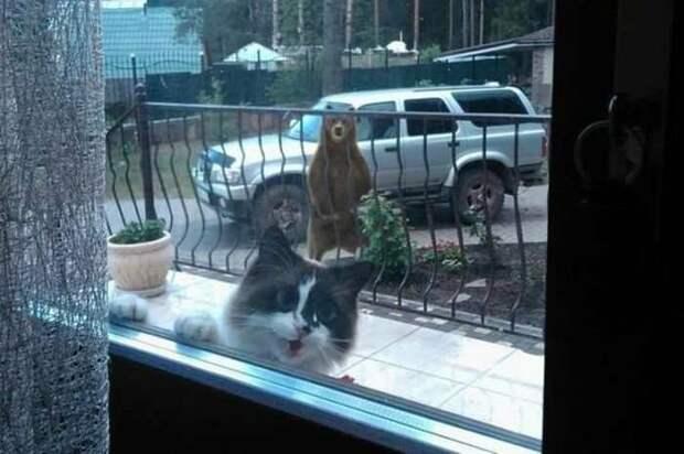 Для чего нужен интернет? Чтобы делиться фотками котиков!