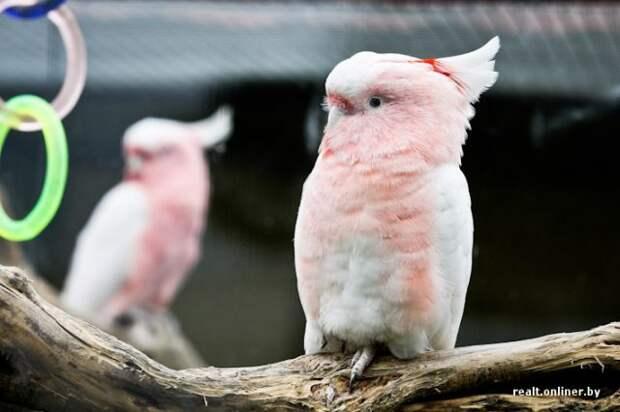 Красивые попугаи