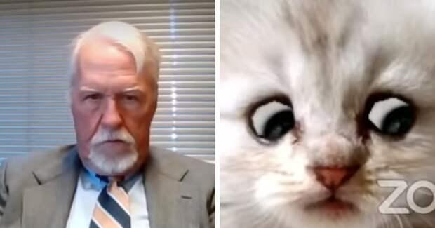 «Я не кот»: Как прокурор явился на онлайн-заседание под кошачьим фильтром