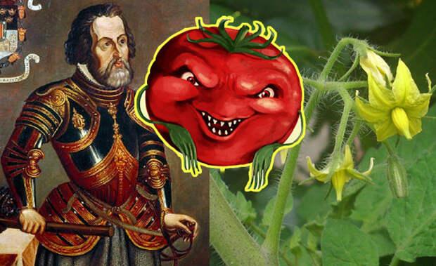 Почему помидоры считались ядовитыми и греховными, и Как удалось избавиться от этих суеверий