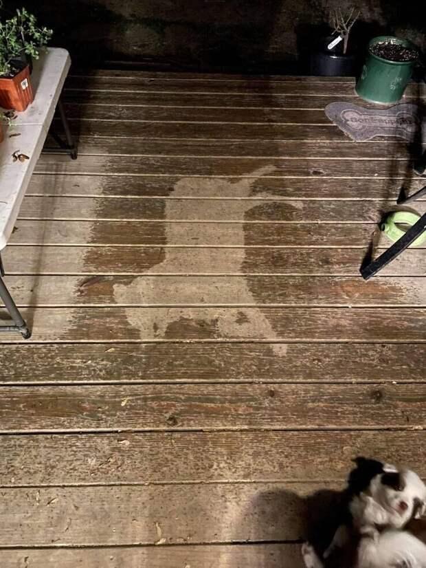 Собака заснула под дождем