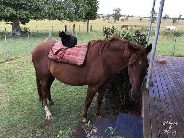 Бездомный кот Моррис находит себе дом, семью и лучшего друга!
