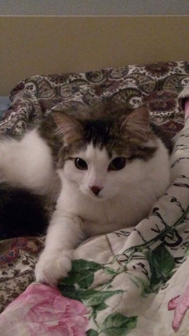 Супруги думали, что взяли ласковую кошку из приюта, но дома она вела себя иначе животные, истории спасения, кошка, кошки, помощь животным, приют