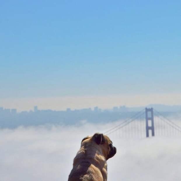 Воздушный туман закрывает мосты от взора собаки, оставляя для просмотра только верхушки.
