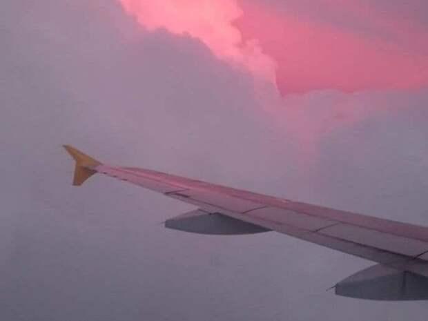 В двигатель самолета, летевшего из Петербурга в Нижнекамск, попала птица