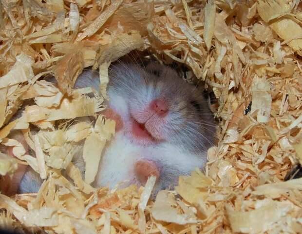 cute-hamsters-54__880