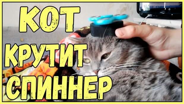 Смешные коты, кошки и даже хрюшки