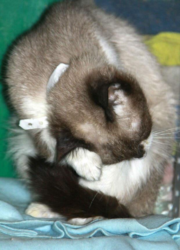 Для поклонников породистых кошек!!!