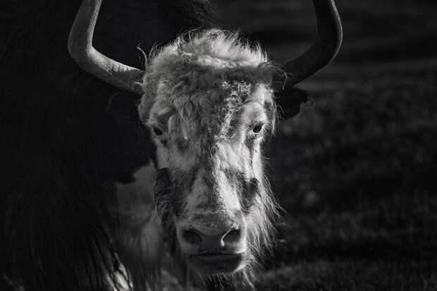 Монголия. Гармония и бесконечный калейдоскоп жизни