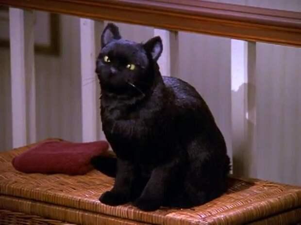 Знаменитого кота Салема на протяжении сериала исполняло 3 разных кота-актера