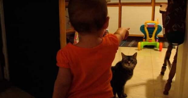 Невероятный диалог девочки и кошки