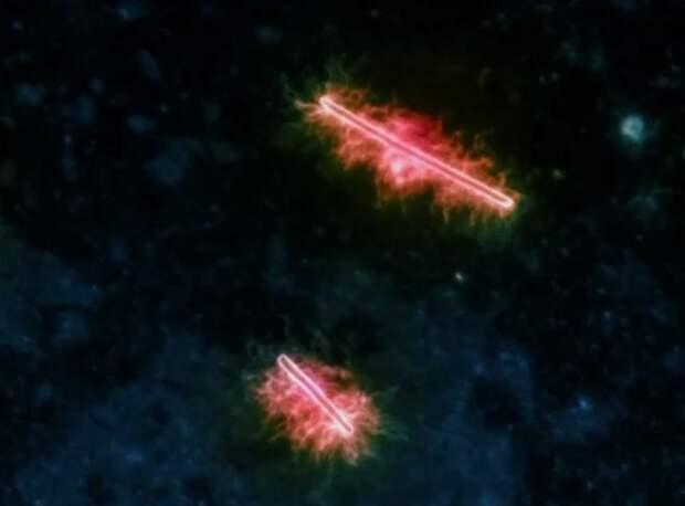 Самые красивые бактерии