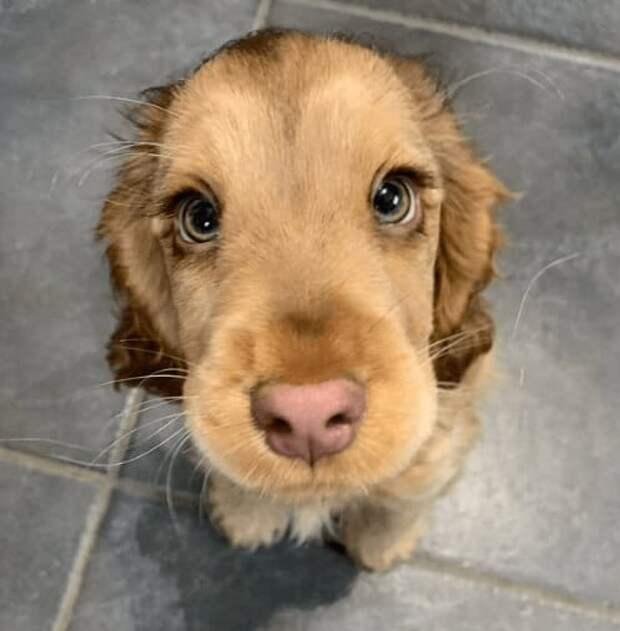 Собака породы спаниель на протяжении трёх месяцев приходил к магазину, где работала его хозяйка.