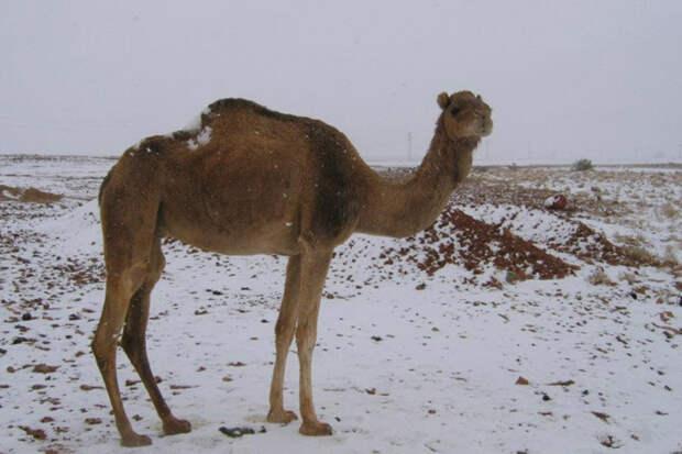 Аномальный мороз: откуда появляется снег в пустынях (10 фото)
