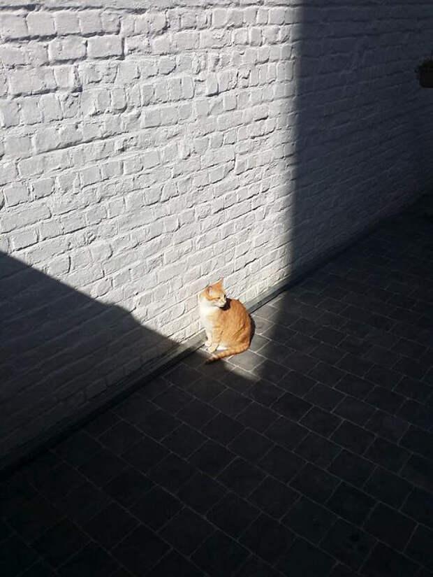Теплый уголок животные, котики, лучи, погреться, солнечные ванны, солнце, температура, тепло