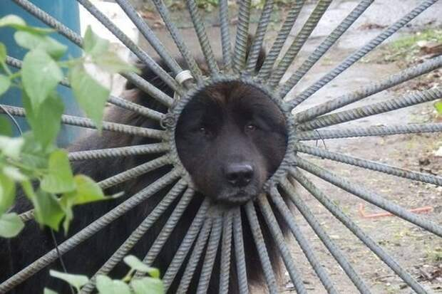 Черное солнышко животные, коты, милота
