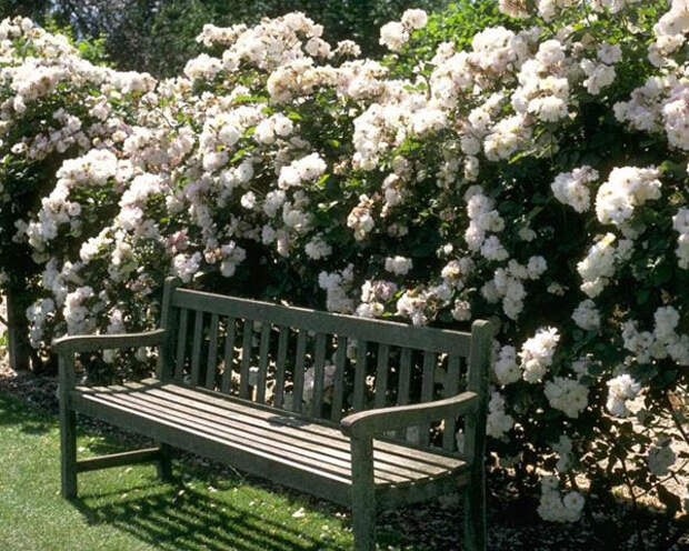 Красивый белый сад